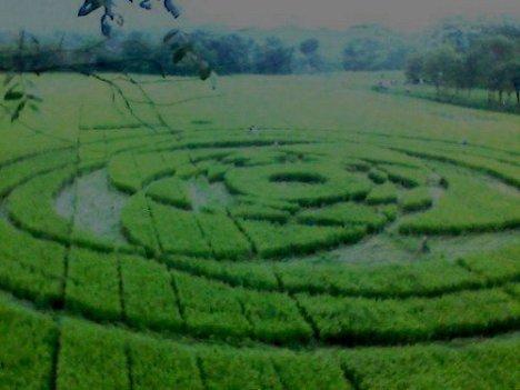 [Image: crop-cicle-sleman.jpg?w=468&h=351]