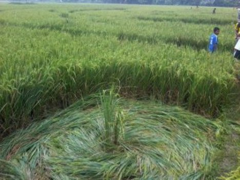 [Image: crop-circle-sleman2.jpg?w=468&h=351]